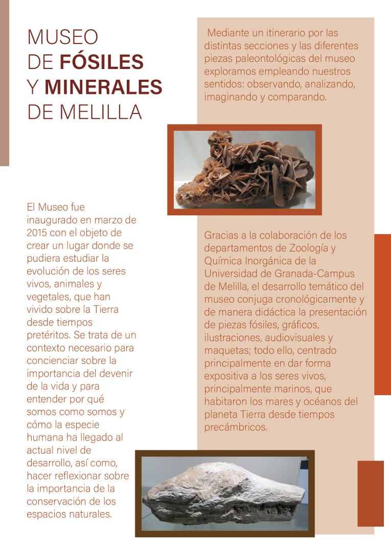 díptco_museo_fósiles_y_minerales_2