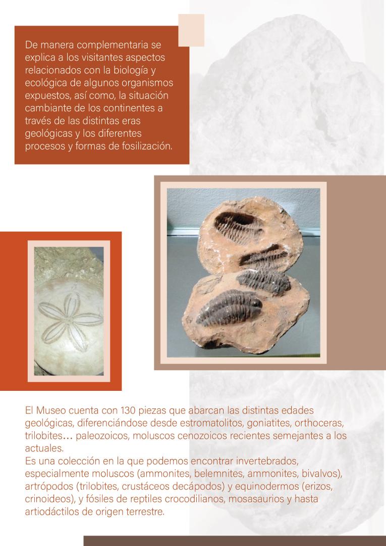 díptco_museo_fósiles_y_minerales_3